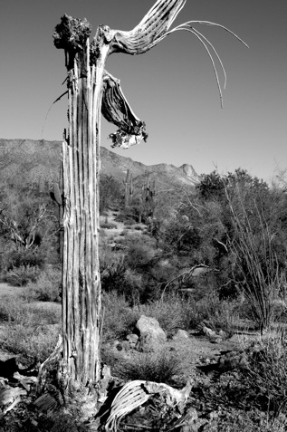 usery-mountain-4.jpg