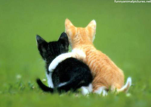 kittens_hugging